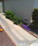 Santa Ana, CA - Hydrojetted kitchen drain