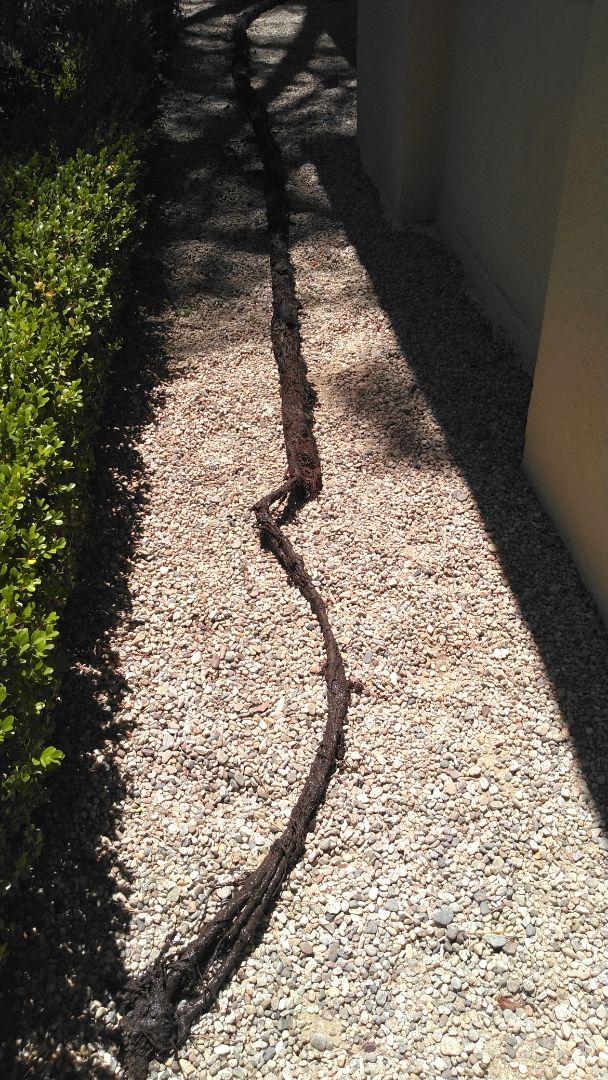 Area drain repair tree roots intrusion