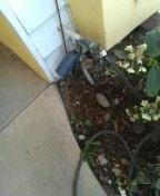 Mis plumbing