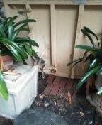 Santa Ana, CA - Snaked kitchen drain