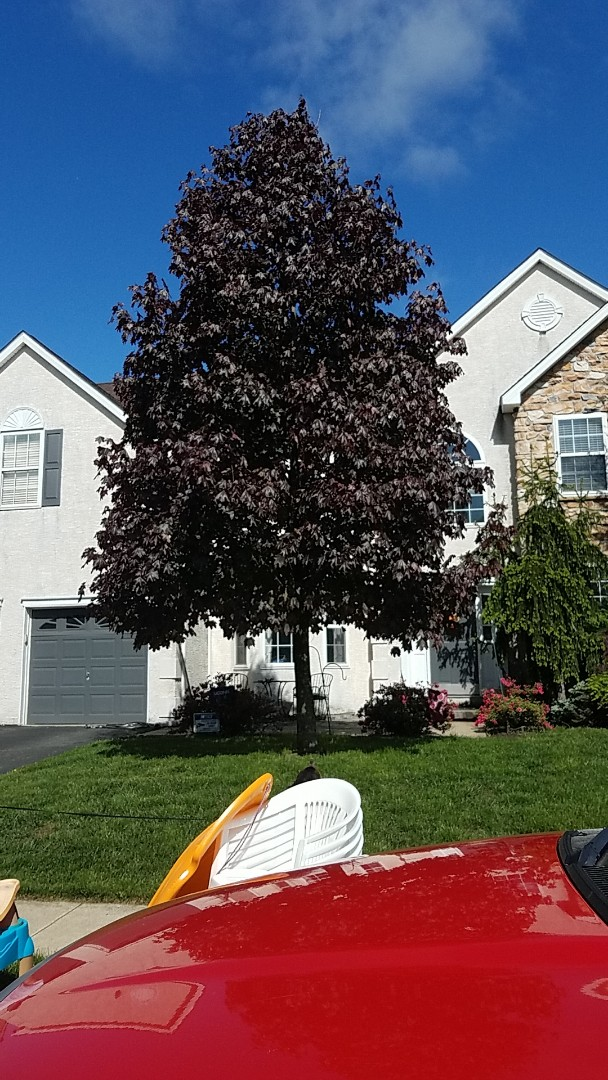Collegeville, PA - Looking to replace stucco