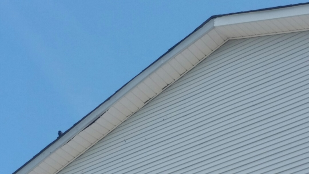 Lexington, KY - We are in Lexington today investigating some loose soffit.