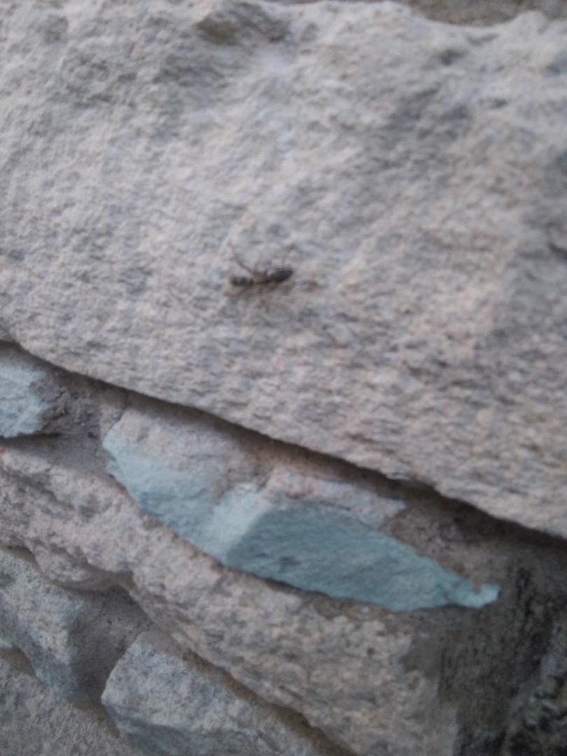 Laguna Vista, TX - Pest Control