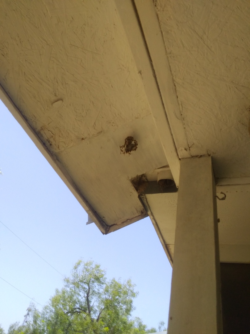 Raymondville, TX - Pest Control Bee/Wasp Removal