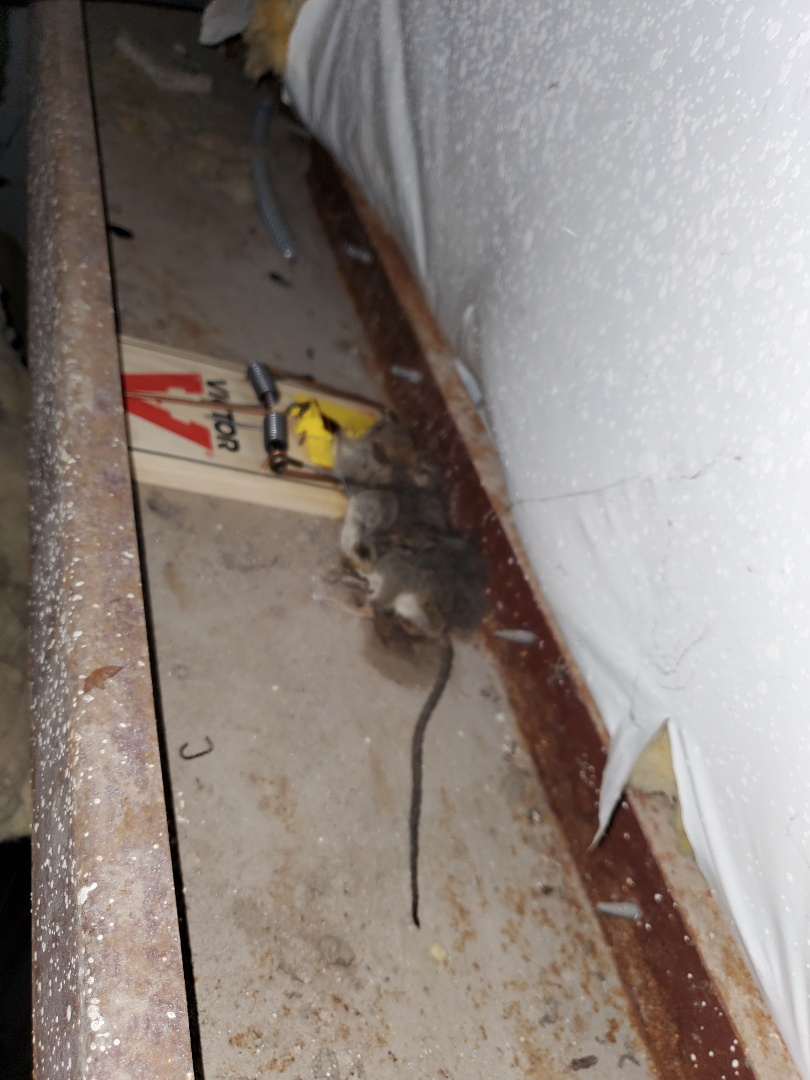 McAllen, TX - Another successful  rodent  exclusion  call BUG WORKS for any type of Pest or rodent  issuses