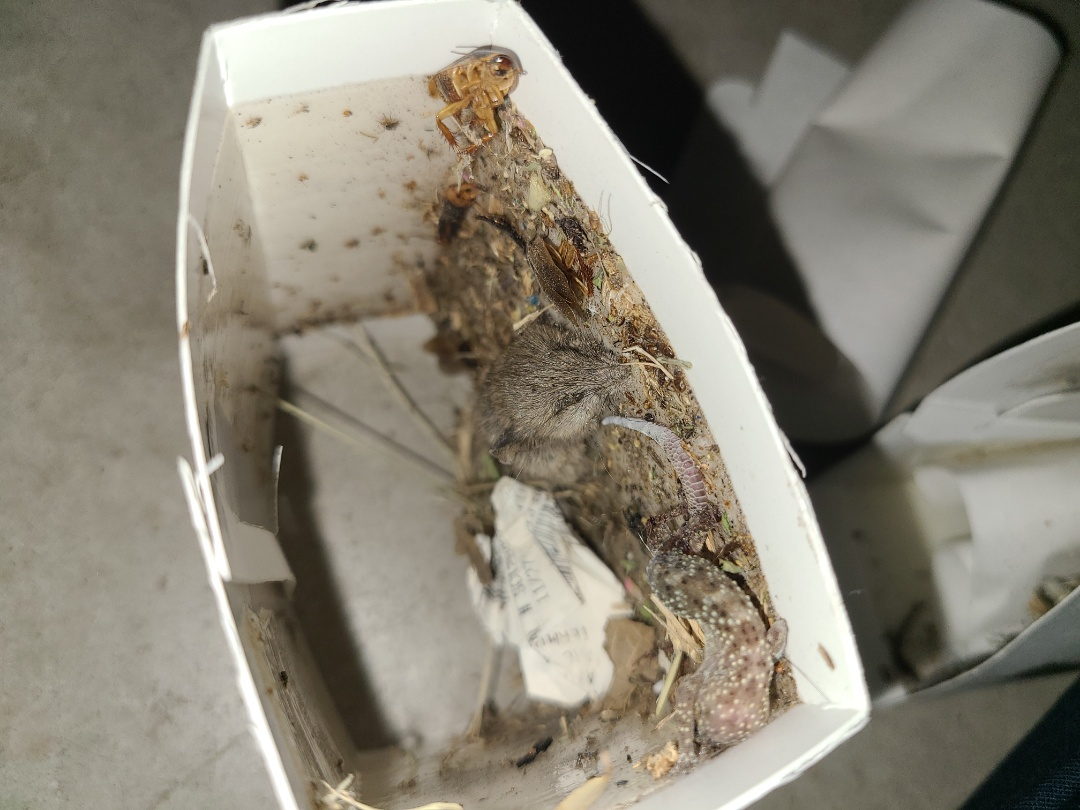 Edinburg, TX - General pest control treatment for spiders ants and roaches.  Glue board by garage door kept mouse from getting in