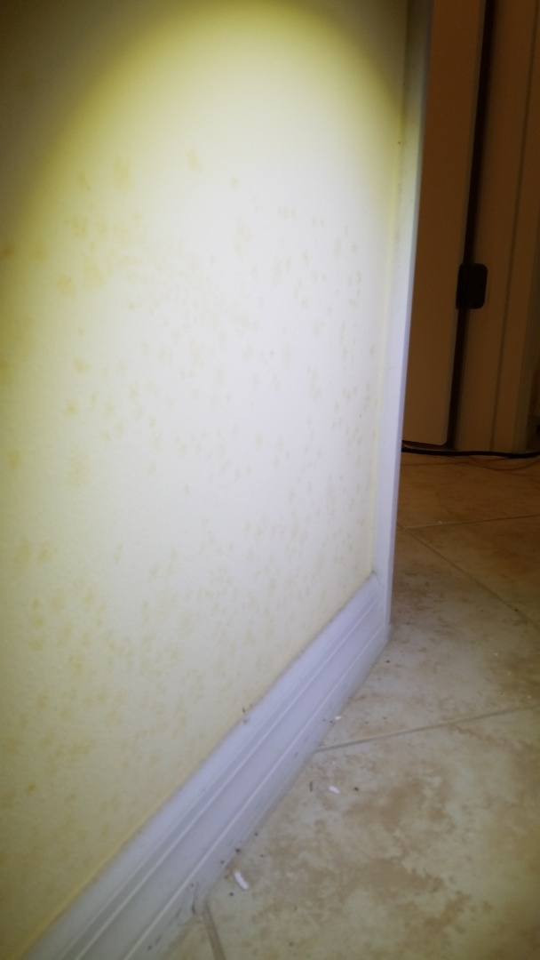 Bradenton, FL - Air conditioning duct clean and living area, mold remediation.