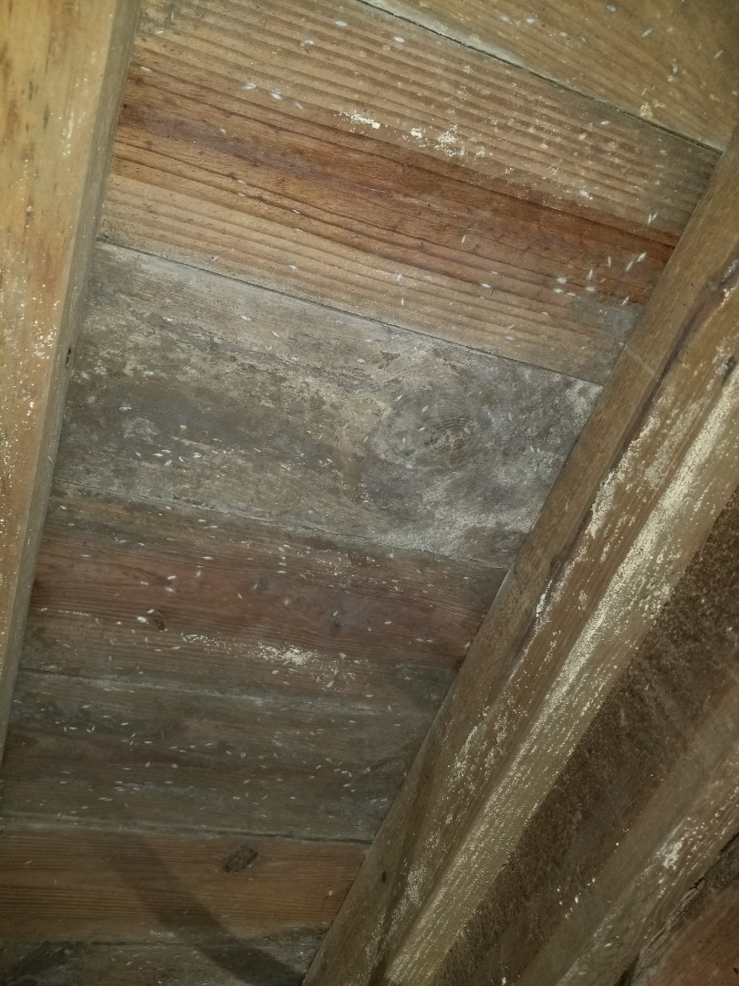 Mold remediation underneath home in crawlspace