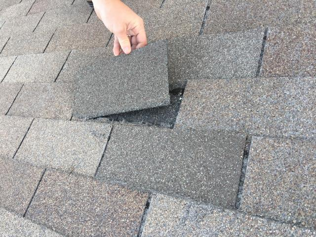 Cibolo, TX - Hail and Wind Damage in Cibolo, TX.  Adjuster recommending a replacement on this roof.