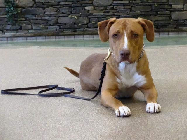 Fuquay Varina, NC - Cooper is in his final day of training and is ready to go home.