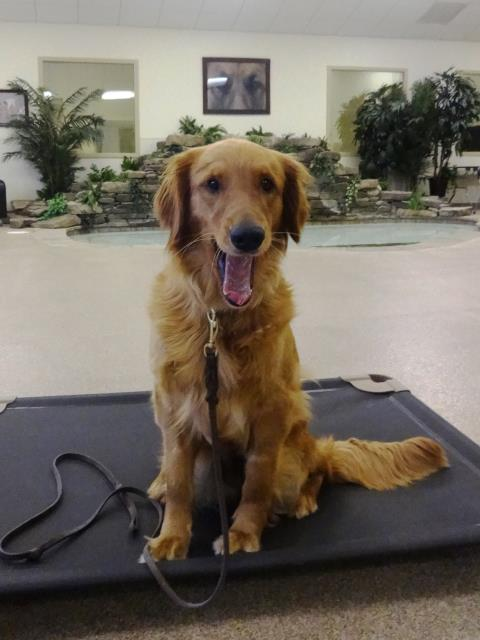 Cary, NC - Gabby is in week two of her obedience training here at the Ranch with Master dog trainer, Adam.