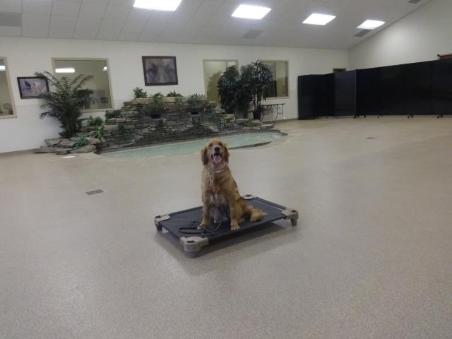 Cary, NC - Gabby continues to gain confidence through innovative obedience training.