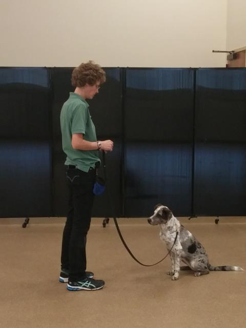 Raleigh, NC - Ava finished her dog training class least night.