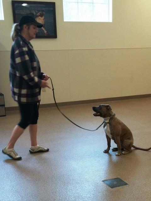 Raleigh, NC - Max came a long ways in his group obedience this semester.