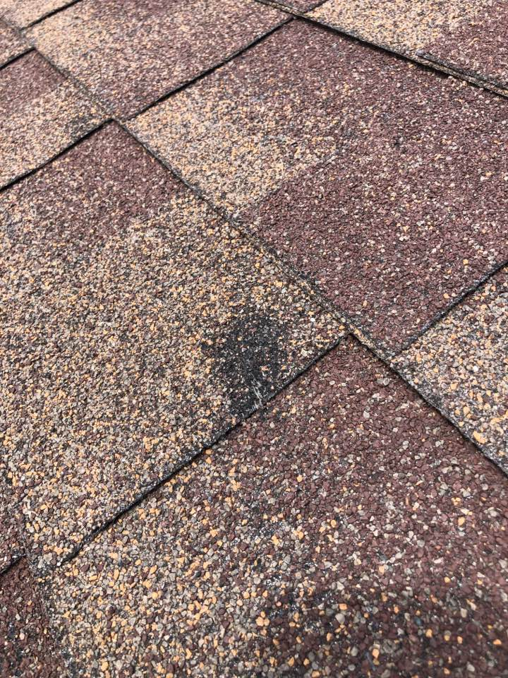Burnet, TX - Inspecting a hail damaged roof to quote a roof replacement in burnet today. Laminated shingle roof that suffered from storm damage.