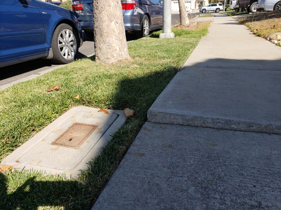 """Salinas, CA - Tree roots lifting concrete by almost 2""""."""