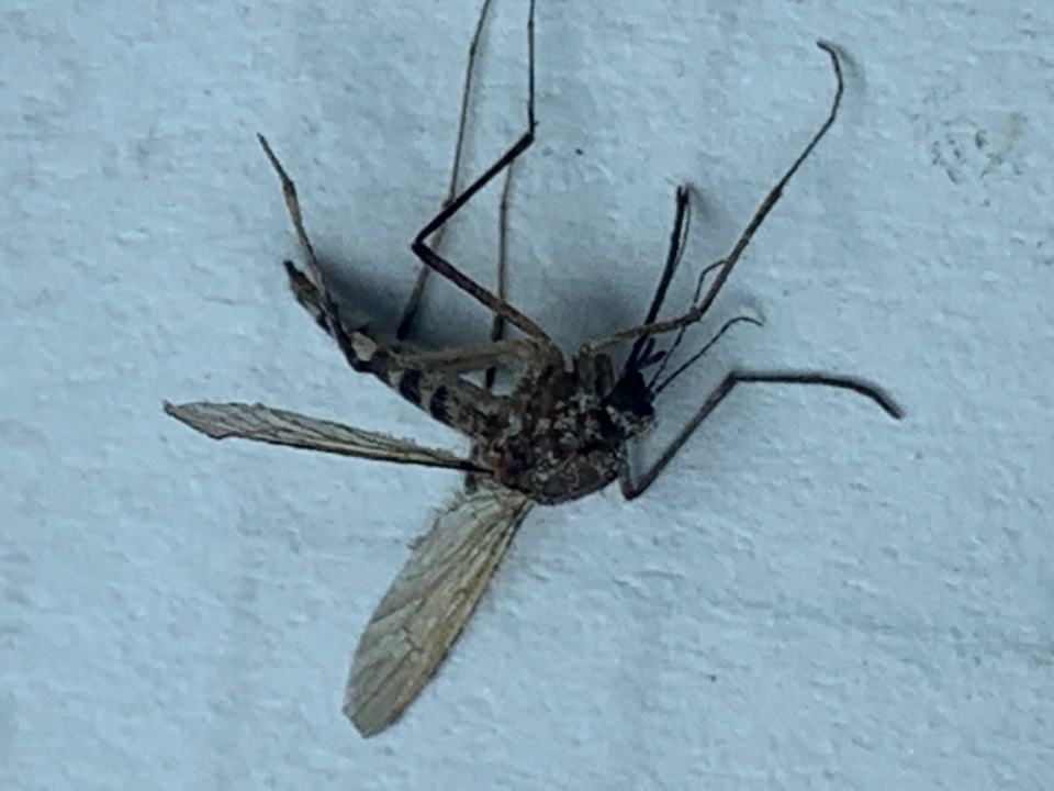 Caledonia, MI - Don't let mosquitoes become an issue this summer. Last year there was a lot of mosquitoes and this summer is predicted to be more wet than the last, wet conditions and more than average rain predicted in the long term weather forecast means a lot of mosquitoes will be buzzing around.