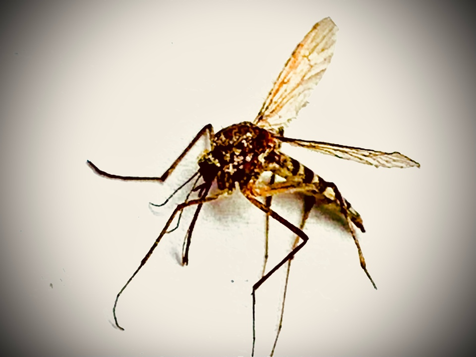 Rockford, MI - Call us if you don't want your summer to be swarmed with buzzing mosquitoes.