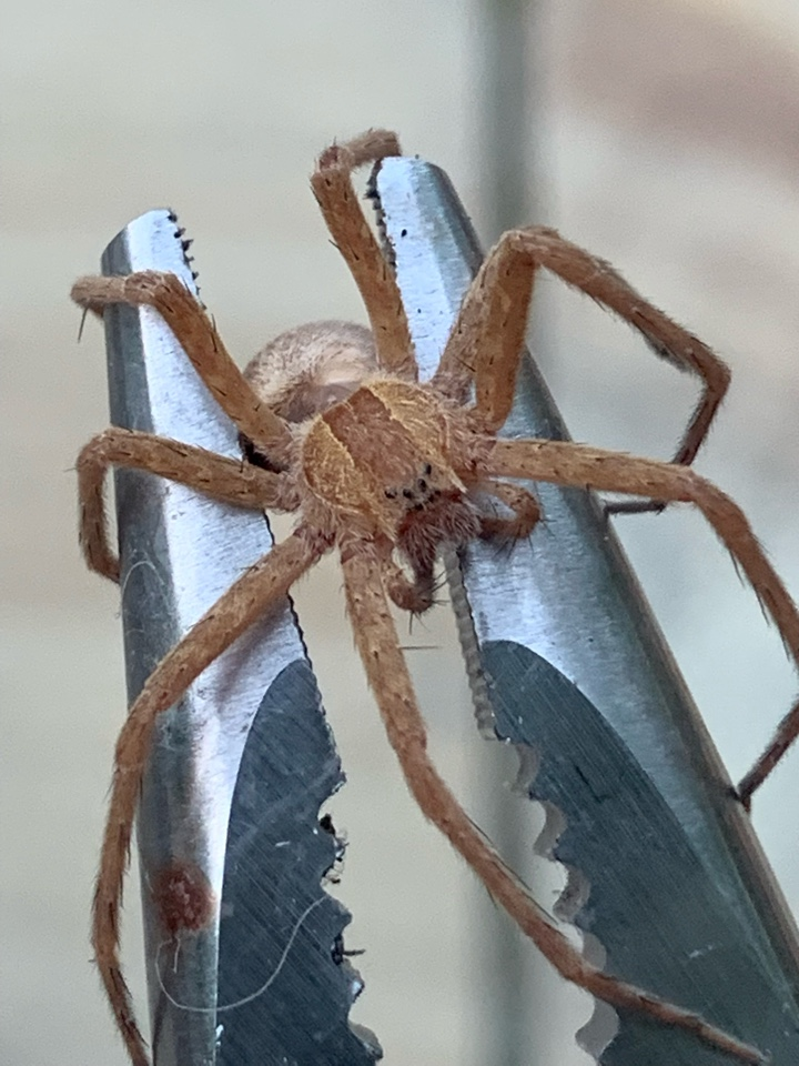 East Grand Rapids, MI - Providing all of our customers with effective pest and safe pest control services. If you need an exterminator we can help you out!