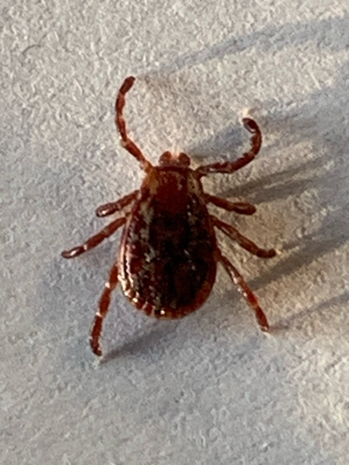 Grand Rapids charter Township, MI - Just sprayed a customers property for mosquitoes and ticks.