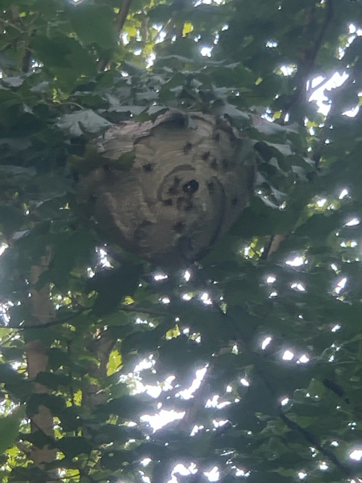 Grand Rapids, MI - Just removed a large bees nest and set up a mouse control program for a customer.