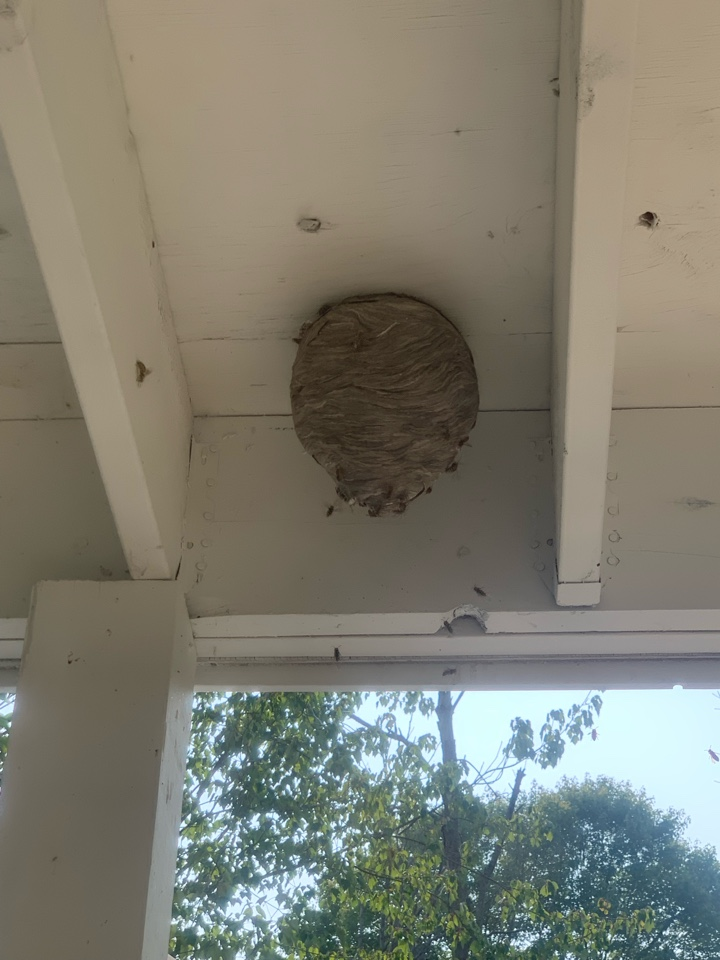 Ada, MI - Taking care of more bees today