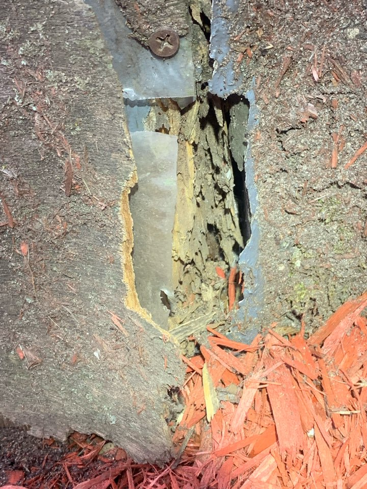 Grand Rapids, MI - Doing a termite job today for a house that has active termites.