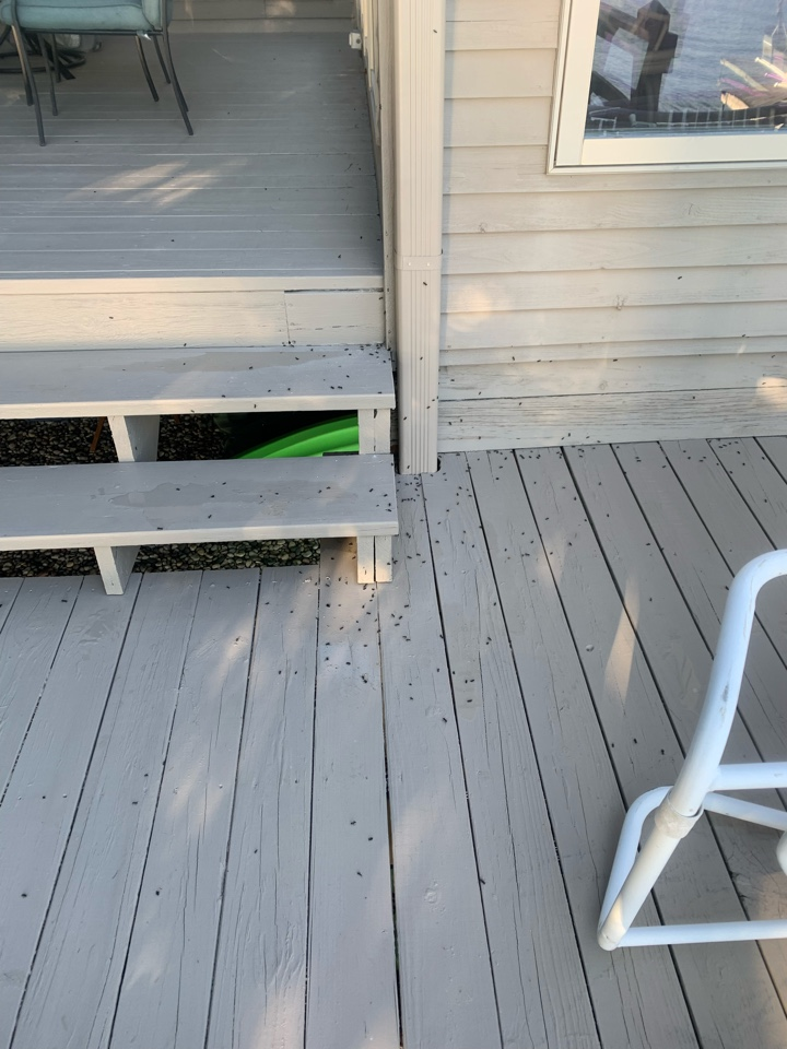 Rockford, MI - Just treated this house for carpenter ants this evening. I was able to find the main colony and get rid of them.