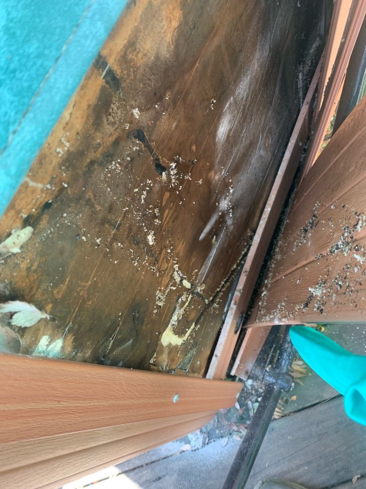 Rockford, MI - Found a big carpenter ant nest inside this hot tub on a customers deck.