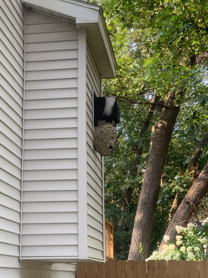 Lowell, MI - Removing a large wasp nest today on the side of a house for a customer.