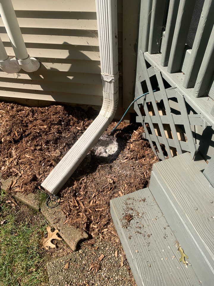 Rockford, MI - Our pest control services just took care of another big ground bees nest.