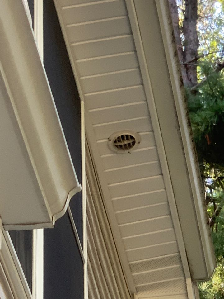 Grand Rapids, MI - Took care of some wasps today for a customer that had them getting inside their house.