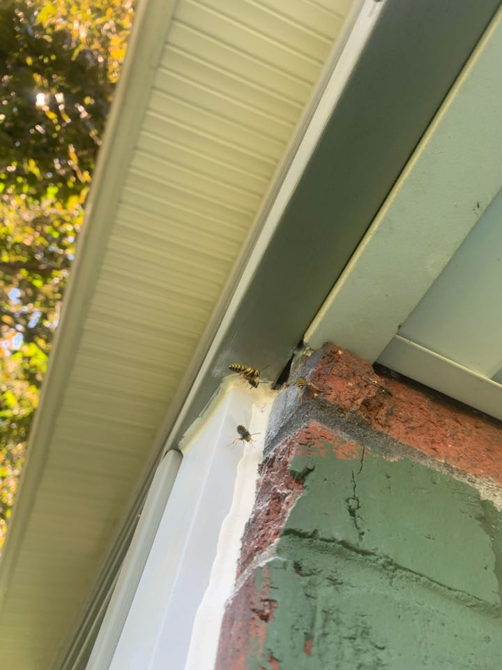 Grand Rapids, MI - Spraying this house for general pests/insects and taking care of this bee problem.