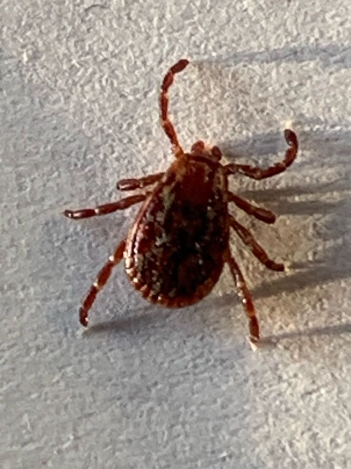Lowell, MI - Our pest control services were needed today to take care of general insects such as stink bugs that are in abundance during the late summer and fall months. We were also called out to treat for ticks that have been showing up on our customers dogs and kids from being in their yard.