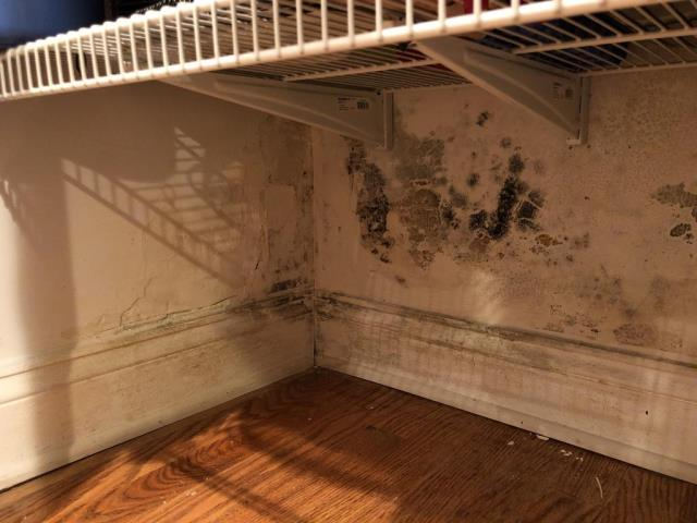 Alexandria, VA - Mold is visible on the walls of the basement rec room closets. The source is likely the neighbor's gutter emptying next to the foundation and leaking through. It's also likely the mold extends across into the front foundation wall in the basement rec room.