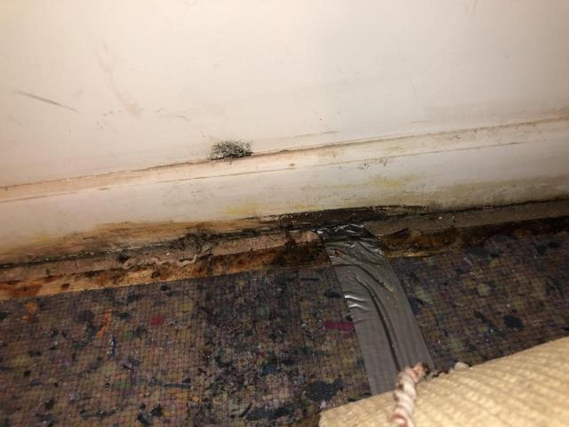 Falls Church, VA - Mold is visible on the drywall and carpet in the basement bedroom. The most likely source is poor drainage or a foundation leak outside. tack strips of the basement guest bedroom.