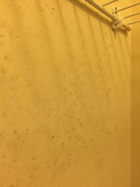 Fairfax, VA - Most of the mold is on the back wall of the closet. In the HVAC closet, there is mold on the right side wall that shares the wall with the affected closet.
