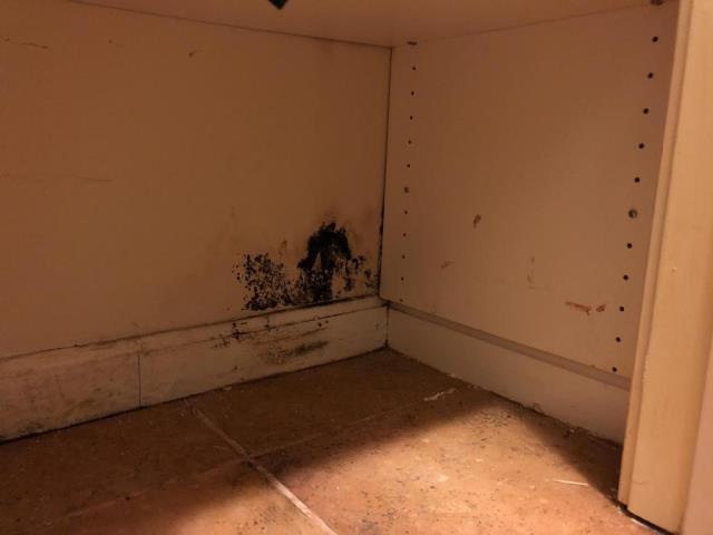 Washington, DC - Mold is visible on the lower walls in the basement hall closet. The adjoining wall is the laundry room. The source is unknown as the wall tests dry with a moisture meter and clothes were washed in the last 48 hours. The laundry room wall has no visible mold or water staining.