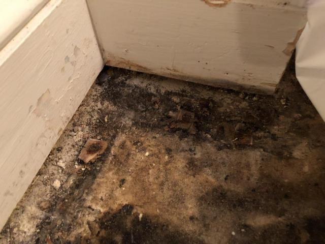 Arlington, VA - InstaScope Assessment completed to assess the air quality in the property.  Discovered mold growth in the corner of basement on carpet and tack strips.