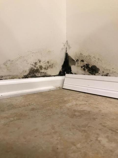 Alexandria, VA - Mold is visible in the basement rec room on the drywall and baseboard. The cause appears to be a mix of an improperly sealed gutter downspout extension and a low spot in the dirt underneath this.