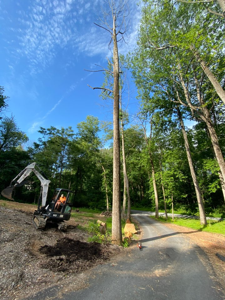 Frederick, MD - Tree removal
