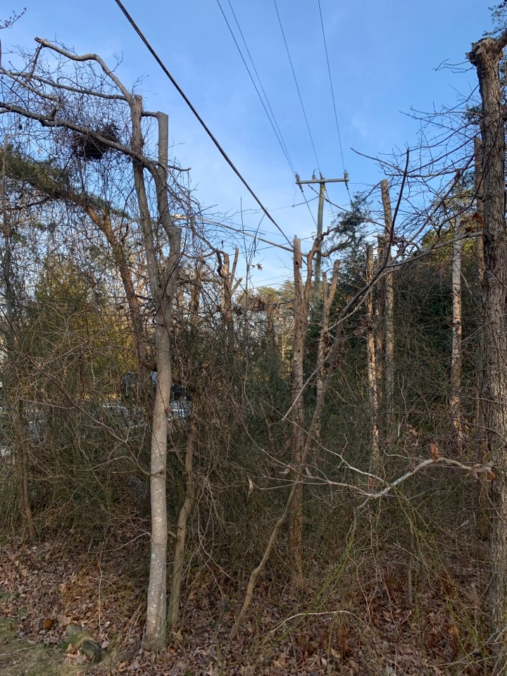 Trees under a power line look great when smaller, as they age and get flat topped, strange looks start to happen. Be careful where you plant. :)