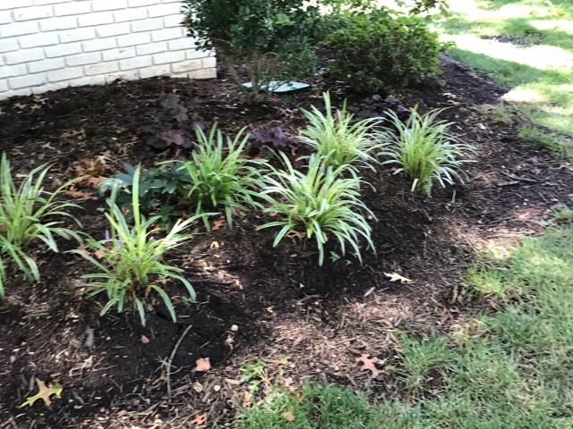 Springfield, VA - Going to spruce up the landscaping and lawn at this home in Springfield. Our lawn care, plant health care and landscape clean up teams will make their yard the envy of the neighborhood.