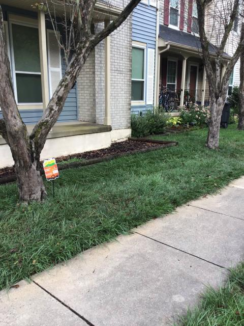 Getting ready to help a family in Centreville with a lawn maintenance program. Going to give them a green lawn the neighbors will be jealous of.