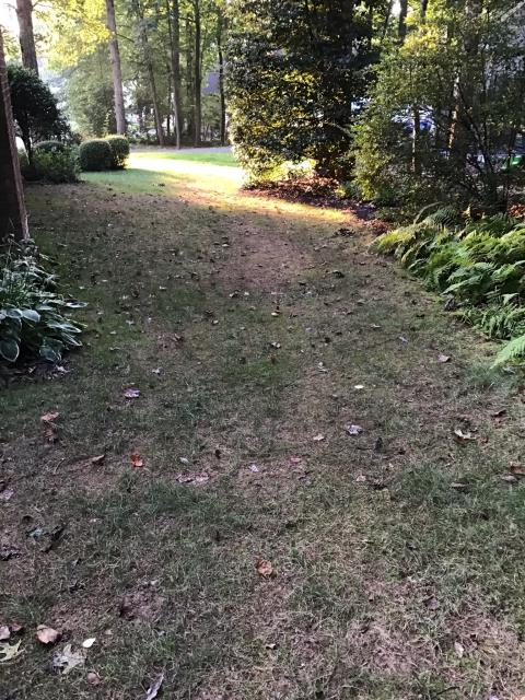 Kicking of a lawn renovation for a great family in Fairfax. Their yard has some challenges with shade, slope and drainage that we're going to solve to give them the lawn they've always wanted. Excited to get started.