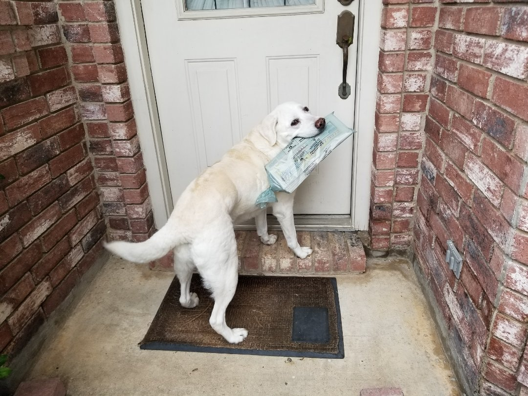 The Colony, TX - VIP Petsitting for a sweet sweet dog named Buffy which is a true retriever.