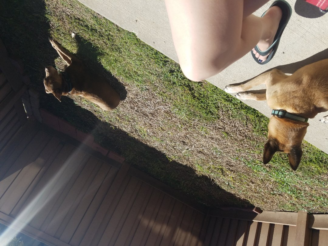 Plano, TX - Afternoon sunbathing with Beau and Betty