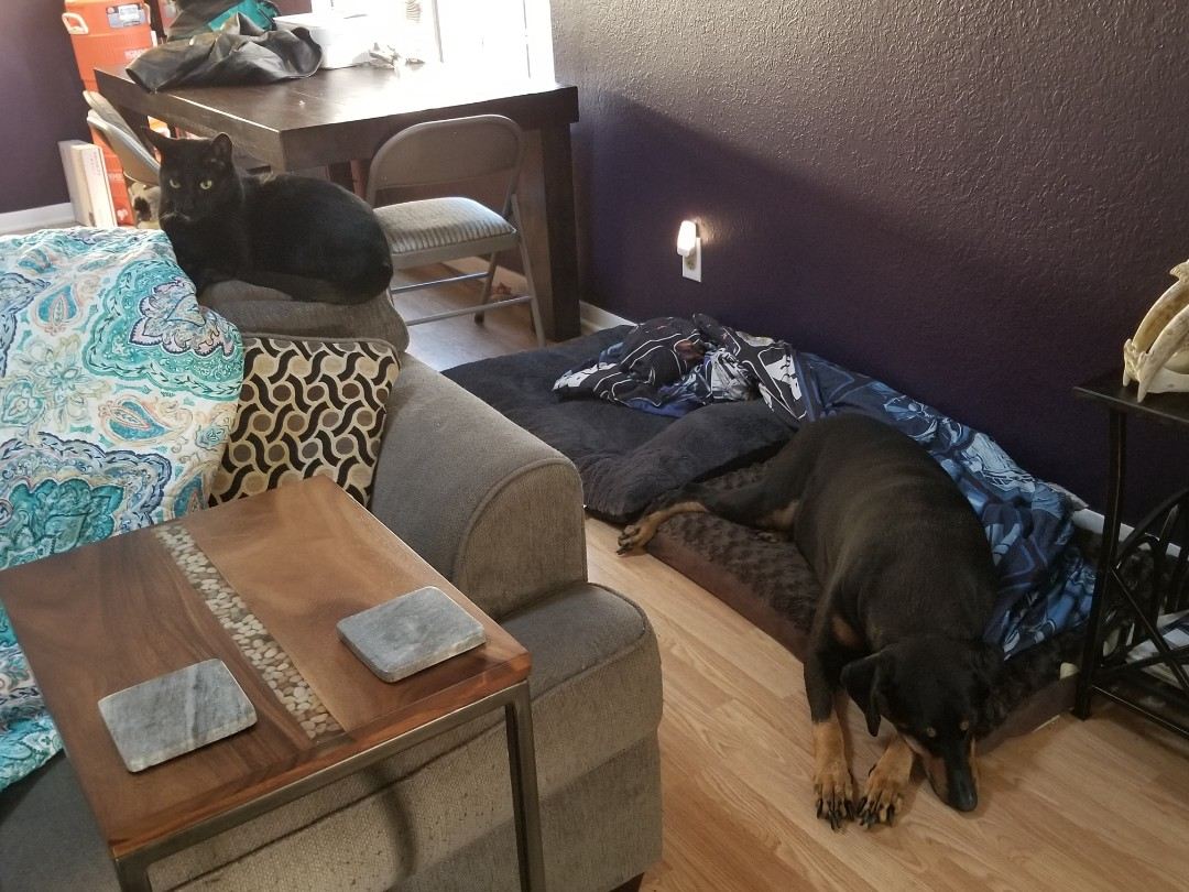 Flower Mound, TX - VIP Petsitting for 4 fur babies, 2 dogs and 2 kitties.