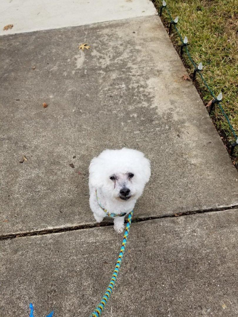 Carrollton, TX - VIP Petsitting dog walk with Bodhi.