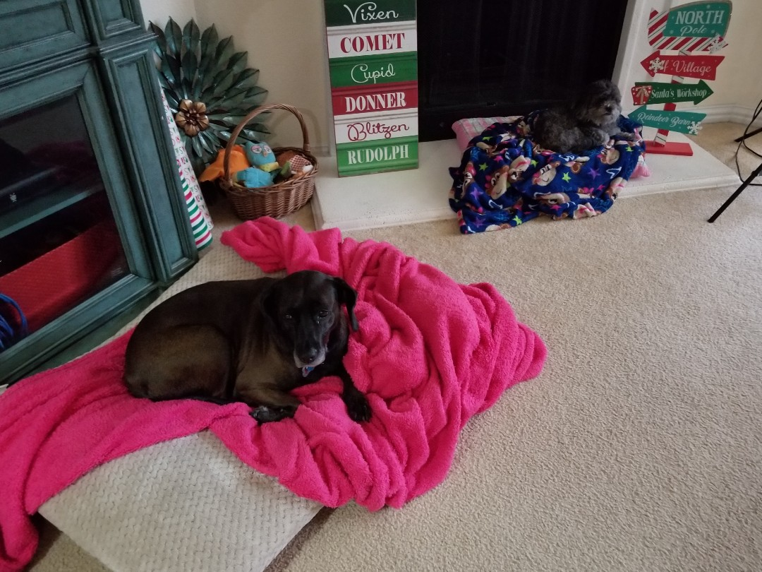 Lewisville, TX - VIP Petsitting service for two very sweet and precious dogs named Sammy and Nikki.